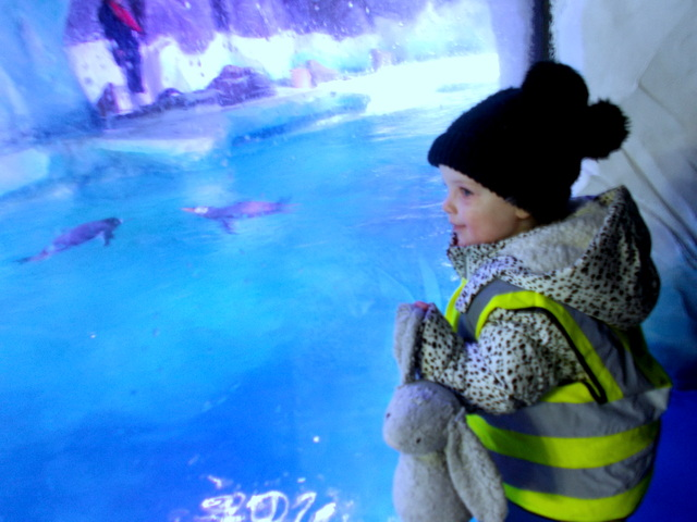 Trip to the Sealife Centre